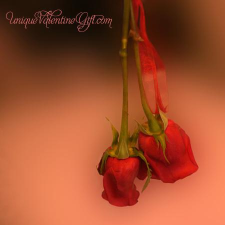 Drying Lover Roses